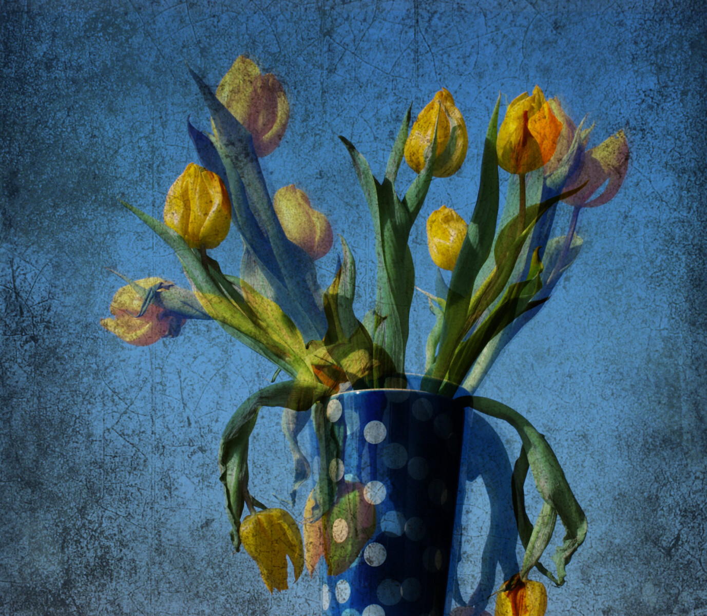 yellow tulips with polka dots, 2011