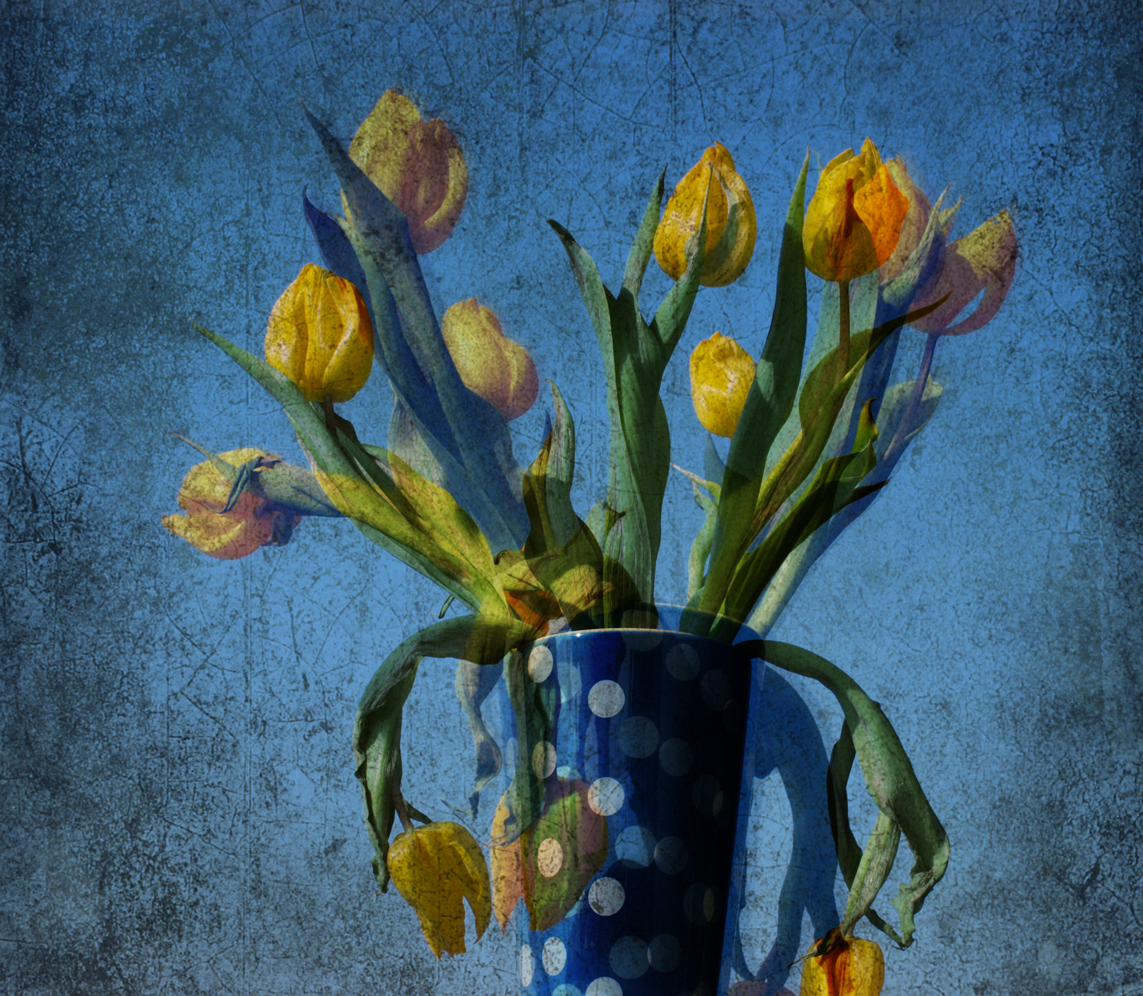 Yellow Tulips With Polka Dots